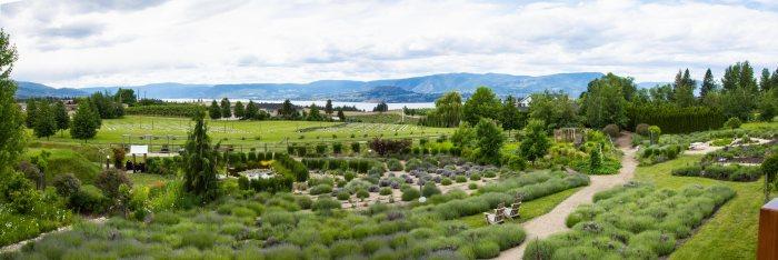 Lavender-Farm-pano